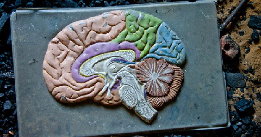 Old plastic model of human brain in abandoned school | © Vladimir Zapletin | Dreamstime Stock Photos