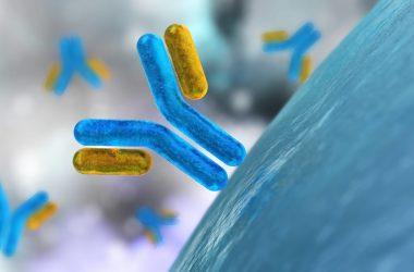 Antibodies and virus