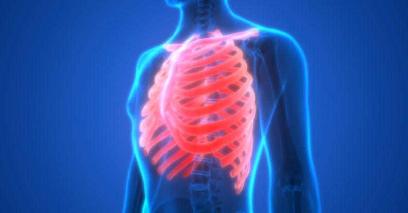 Human Skeleton Ribs Anatomy