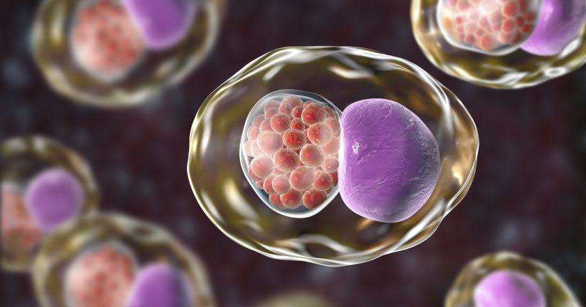 Chlamydia trachomatis bacteria | Χλαμύδια