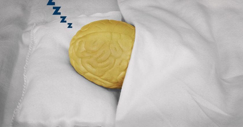 Brain sleeping | © Boazyiftach | Dreamstime Stock Photos