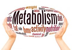 Metabolism word cloud hand sphere concept | © Spettacolare | Dreamstime Stock Photos