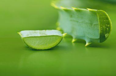 Aloe vera   © Lesuhova   Dreamstime Stock Photos