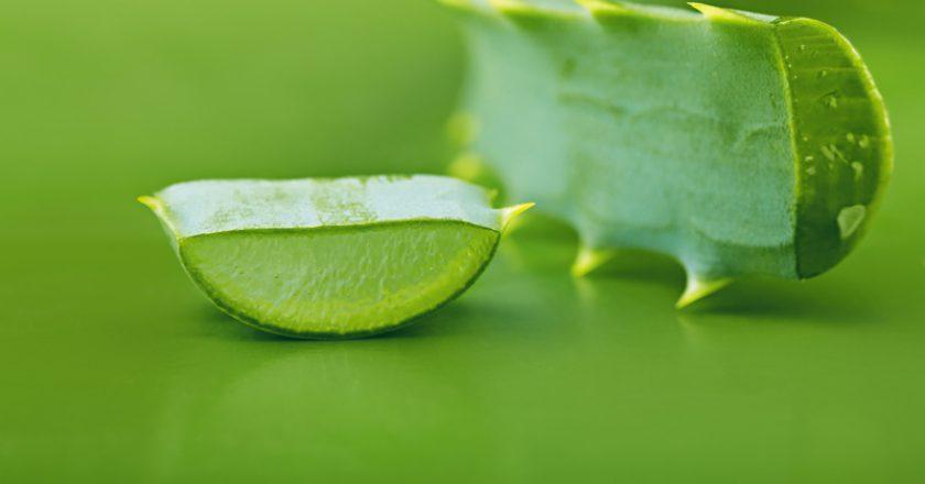 Aloe vera | © Lesuhova | Dreamstime Stock Photos