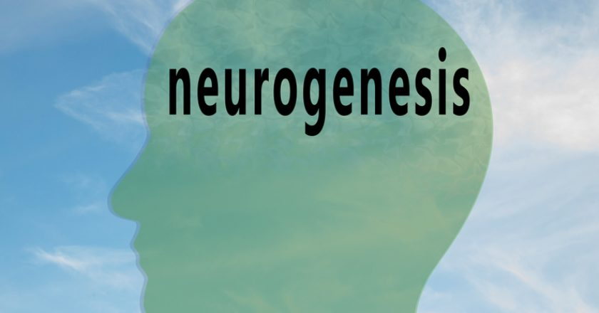 neurogenesis - biological concept | © Hafakot | Dreamstime Stock Photos