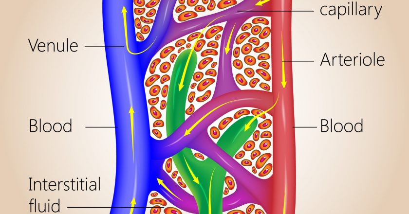 Lymphatic and Blood Capillaries