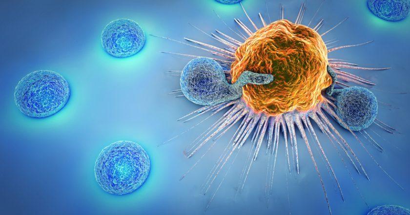3d illustration of cancer cells and lymphocytes | © Burgstedt | Dreamstime Stock Photos