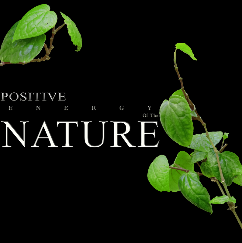 Positive energy of  the Nature green leaves and black background | © Anitamaurya1485 | Dreamstime Stock Photos