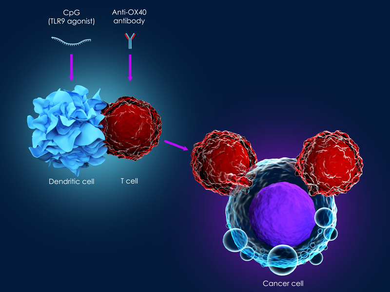 Cancer immunotherapy with CpG and anti-OX40 antibody | © Meletver | Dreamstime Stock Photos