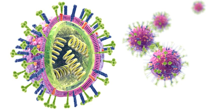 Flu. Influenza viruses with RNA, surface proteins hemagglutinin and neuraminidase,  medically 3D illustration | © Axelkock | Dreamstime Stock Photos