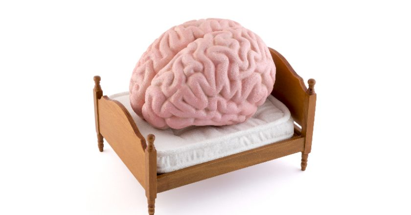 Human brain resting on the bed | © Sqback | Dreamstime Stock Photos