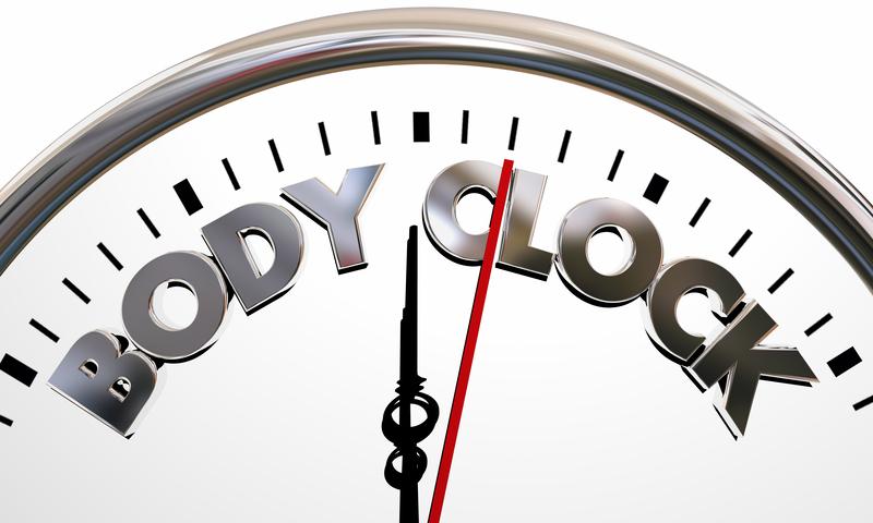 Body Clock Health Wellness Life Longevity Words   © Iqoncept   Dreamstime Stock Photos
